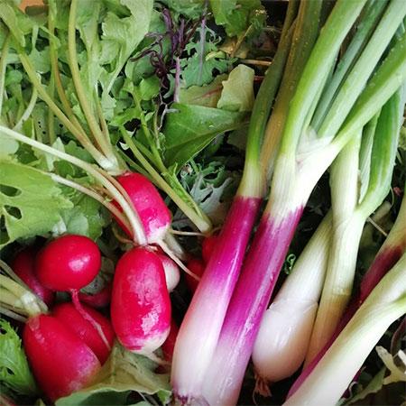 新鮮な地元産のオーガニック野菜